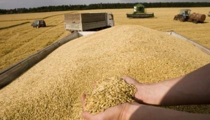 У поточному періоді обсяги закупівлі зернових, саме у сільгоспвиробників, будуть не менше 200 тис. т озимої пшениці, 80 тис. т озимого ячменю та 15 тис. т озимого жита