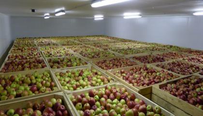 В Україні виробляється 2 млн т фруктів, проте зберігальні потужності становлять всього-на-всього 250 тис. т, при цьому тільки 70 тис. т цих обсягів забезпечені технологією регульованого газового середовища