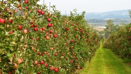Садоводство нуждается в большем внимании государства