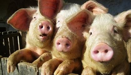 Для Тернопільської області, в якій стрімко розвиває тваринництво, потрібен завод з переробки відходів тваринного походження
