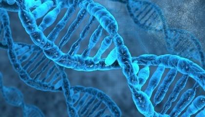 Протеїн-9 (Cas-9) працює як дослідник всередині генома, відшукуючи ділянки, які вчені можуть видалити, змінити або перемістити