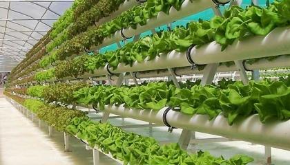 Национальный совет органических стандартов США признал, что продукция, выращенная на гидропонике, имеет право на получение органического сертификата в случае соответствия всем другим его требованиям