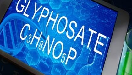 Европейское агентство по химическим веществам (ECHA) и Европейское управление по безопасности пищевых продуктов (EFSA) вновь должны были защитить свои оценки риска гербицида глифосата против обвинений в том, что соответствующие данные не были рассмотрены