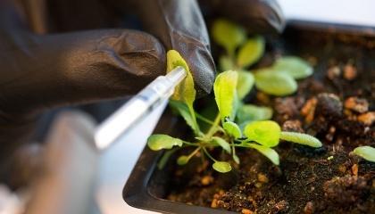 У ВРУ розглянуть зміни до деяких законодавчих актів щодо введення до 2023 року мораторію на вирощування ГМ сільськогосподарських рослин, виробництво, переробку, обіг, транзит та ввезення ГМО, здатних до самовідтворення або передачі спадкових факторів