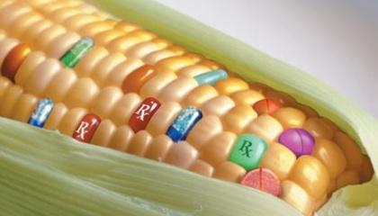 Ніхто не може передбачити того, що відбудеться в майбутньому, зокрема, під впливом кліматичних змін. Тому ГМО необхідно зберегти