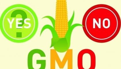 Для виведення нового сорту ГМО потрібно близько $3 млрд, а сам процес займає 5-10 років. А людей, які можуть виводити нові ГМО-сорти, близько сотні в усьому світі