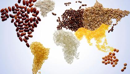 Сейчас генетически модифицированные культуры выращивают в 28 странах мира, и в почти 30 странах существует запрет на их использование или выращивание