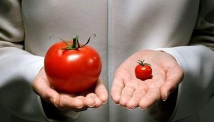 Евродепутаты возразили Еврокомиссии в одобрении импорта продукции из устойчивой с гербицидам генетически модифицированной кукурузы и хлопка