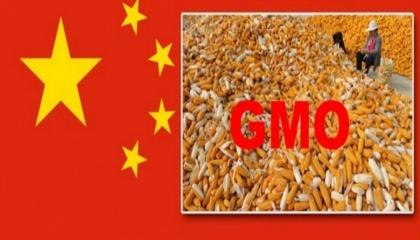 Мінсільгосп Китаю також відновило імпорт для 14 інших видів ГМО, включаючи кукурудзу MIR162 Duracade компанії Syngenta, цукровий буряк компанії Монсанто і три сорти ріпаку компанії Байєр