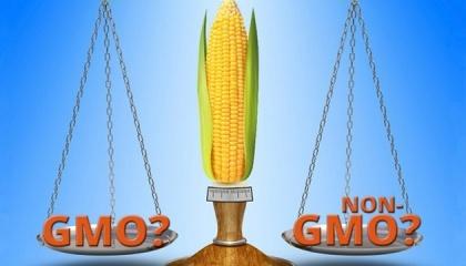 За даними SGS Group, в Україні в порівнянні з 2015 роком ситуація трохи покращилася: Вміст ГМО по сої - тільки 10% партій абсолютно чисті від ГМО. Багато ГМО кукурудзи. Лише 10% всіх відвантажень вільні від ГМО