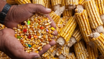 """У ВРУ зареєстровано законопроект """"Про державний контроль за генетично модифікованою продукцією в сільському господарстві і харчовій промисловості"""""""