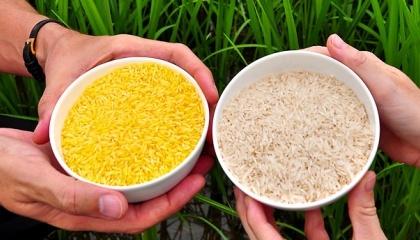 Ще один плюс ГМО - усунення авітамінозу. У деяких продуктах не вистачає вітамінів, наприклад, в рисі мало вітаміну А