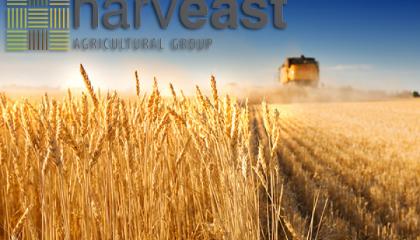 HarvEast создает собственную семенную лабораторию, которая позволяет контролировать качество собственного семенного материала и сторонних производителей