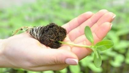 Ад'юванти - це речовини або сполуки, які додаються до пестицидів або листових добрив для підвищення хз ефективності
