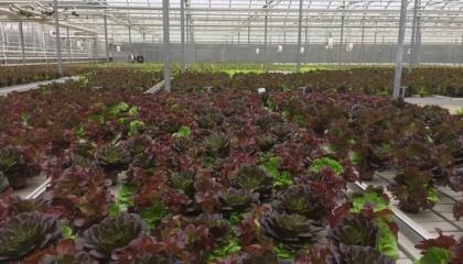 В Канаде существуют огромные возможности для органического бизнеса, поскольку 80% органических продуктов государство импортирует