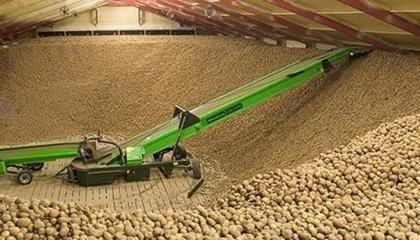 Поставки увеличились из-за более позднего поступления на рынок нового урожая