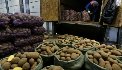 В Украине стремительно повышается цена на картофель и морковь. Если стоимость килограмма моркови только достигла рекордных показателей прошлого года, то в случае с картофелем можно констатировать установление пятилетнего ценового рекорда