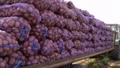 Як тільки ціна на картоплю в Україні перевалить за середньоєвропейську і стане вигідним імпорт з тієї ж Польщі, Болгарії, Румунії, сюди автоматично потече той продукт