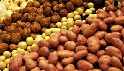 Пять стран Северо-Западной Европы, которые одновременно являются крупнейшими производителями картофеля в ЕС, ожидают рекордный урожай