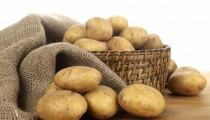 У лютому роздрібні ціни на картоплю можуть досягати 12-16 грн/кг