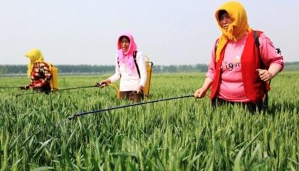 По данным Национального бюро статистики Китая (NBS), в апреле 2017 года Китай произвел 333,131 т пестицидов, что на 2,05% меньше по сравнению с аналогичным периодом прошлого года