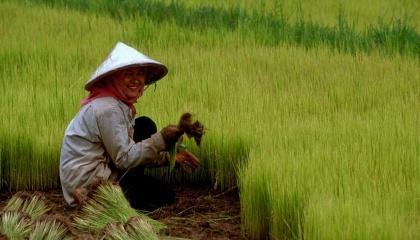 Минсельхозя Китая намерено выделить ряд субсидий для фермеров, использующих органические удобрения в своем хозяйстве