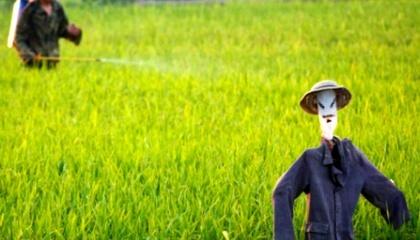 Китайські вчені розробили «розумний» пестицид, який при потраплянні в ґрунт сам себе контролює для внесення необхідної дози препарату