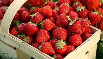 Щоб задовольнити ненаситний апетит британців до полуниці, місцеві супермаркети почали продажу цієї ягоди у великих ємностях