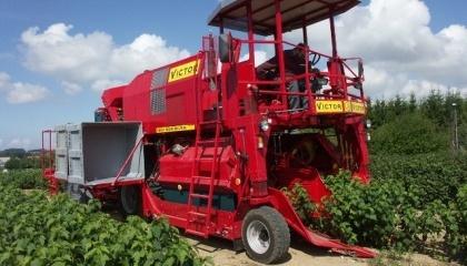 Выращивание ягод в Украине становится реальным сектором АПК, который уже дает серьезные поступления в бюджет, формирует пусть сезонную, но занятость населения и показывает тенденции к ежегодному приросту показателей