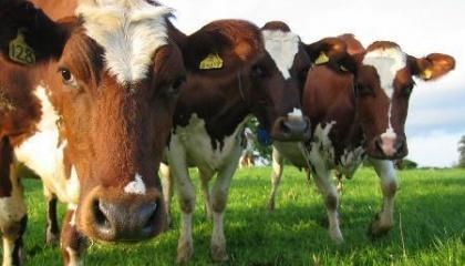 У регіоні збільшення продукції тваринництва при скороченні поголів'я пояснюють ростом продуктивності.