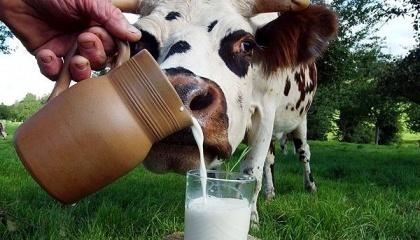 З 2016 р. в молочній галузі з'явилося безліч стартапів, які змінять виробництво і переробку молока. Більшість з них стосувалися експериментів з автоматичним визначенням хвороб і автоматизацією виробництва