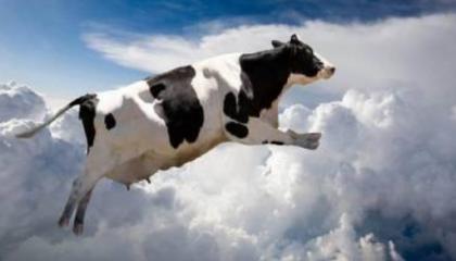 В ближайшее время молока будет становиться все меньше. Молочное стадо будут вырезать
