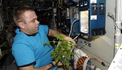 У Космічному центрі Кеннеді створили концепт оранжереї, яка підійде для розведення «саду-городу» на космічних станціях