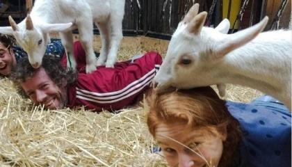 В Нидерландах открылась необычная козья ферма Goat Yoga Amsterdam, где желающие могут не только заняться йогой с козами, но и попасть на прием к уникальным и необычным массажистам – козлятам