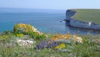 В окупованому Росією Криму цієї весни почнуть вирощувати лікарські трави для експорту в південноазіатські країни
