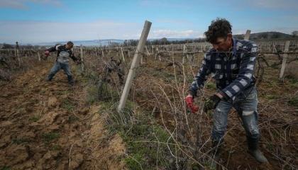 Экономическая ситуация в Крыму после аннексии Россией очень изменилась. Больше всего от оккупации пострадали сельское хозяйство и туризм, которые были основными для крымских семей
