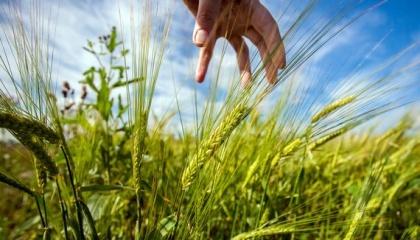 Аграрії анексованого Росією Криму відправили в серпні за кордон 105,7 тис. т зерна і продуктів його переробки