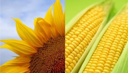 Світова тенденція - основні виробники скорочують площі під пшеницею, вибираючи більш маржинальні культури. Для України такими можуть бути кукурудза і соняшник