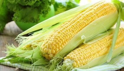 Два основних напрямки для експорту української кукурудзи в поточному маркетинговому році - це Європейський Союз і Китай. Такий прогноз зробили аналітики Soufflet