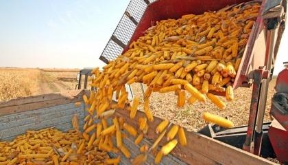 В текущем сезоне Украина может также рассчитывать на увеличение экспорта кукурузы в направлении ЕС