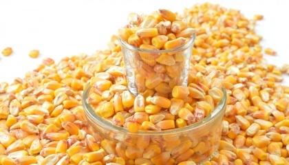 Компания Мonsanto планирует открыть в следующем году в селе Почуйки Житомирской области новый семенной завод, который будет производить высококачественные семена кукурузы