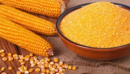 Істотне перевиробництво кукурудзи і зниження прибутковості цього сегмента можуть стати підставою для розвитку внутрішньої переробки та нарощування експорту