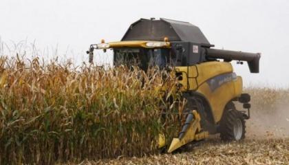 В текущем сезоне цены на кукурузу в Украине самые низкие за три последних года, в то время как урожай по объемам может стать вторым рекордным – 27 млн. т