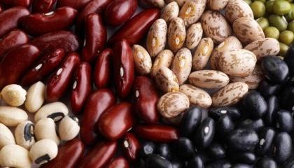 ПНАК готовий забезпечити селян насінням квасолі, надати будь-які потрібні консультації, і викупити потім усю вирощену продукцію за ринковими цінами