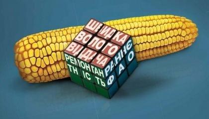 Поскольку осадки и климат аграрии контролировать не научились, нужно идти другим путем. А именно - создавать гибриды, которые будут давать стабильную урожайность даже при недостаточном увлажнении