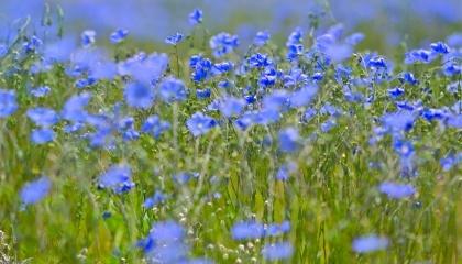 Поскольку почвенно-климатические особенности Ровенской области благоприятные для развития этой отрасли, то с выращиванием и сбытом льна проблем не будет
