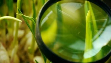 Израильские специалисты обследовали украинские поля и предоставили ряд рекомендаций по повышению качества обработки пестицидами и внедрения орошения
