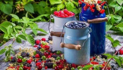 Конкуренция со стороны крупных хозяйств в данном секторе достаточно невысокая, что и является главным преимуществом выращивания этих ягодных культур небольшими хозяйствами