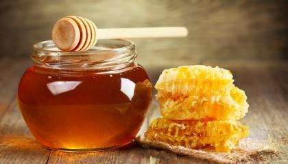 Україна в першому півріччі 2017 року збільшила експорт меду в 2 рази - до 29,6 тис. т