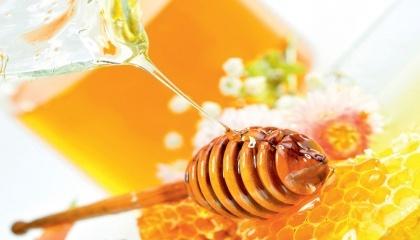 Бджолині кооперативи, які будуть спущені згори, пасічники розглядають як спробу  поставити їх на облік ще й обкласти податком